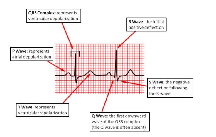 ECG Wave explanation